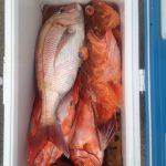 2013/06/23 御前崎 第二隆星丸 根魚ジギング