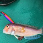勝浦良丸での根魚ジギング